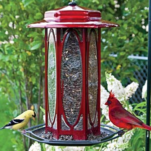 Scarlet Rose Songbird Feeder