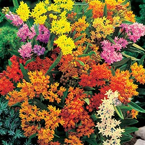 Butterfly Plant Mix