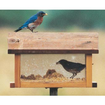 See-Through Bluebird Diner