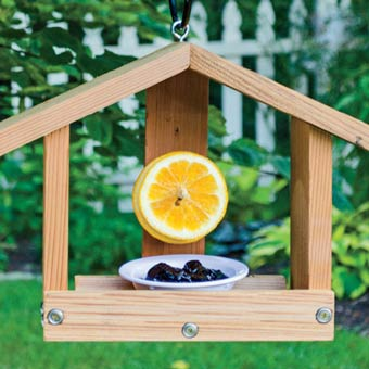 Oriole Orange & Jelly Feeder