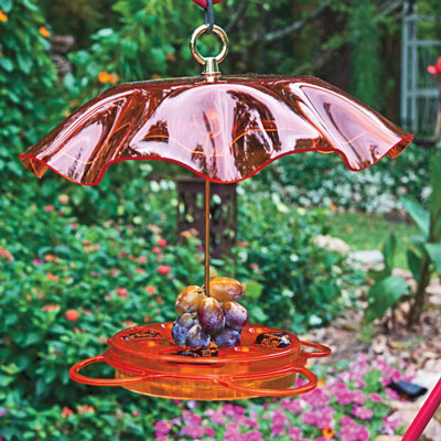 Protected Oriole Feeder