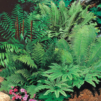 Mixed Hardy Fern Bargain Bag